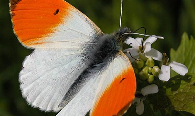 Paradis du papillon